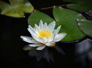 Meditatiedag 8 september 2019