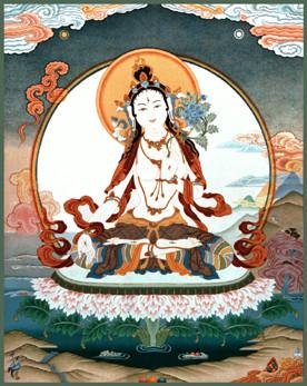 Afbeelding QWitte Tara door Marian v.d. Horst